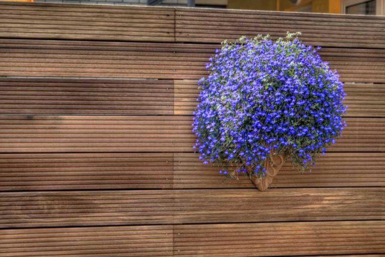 Detail blaue Blumen im Blumentopf auf Holzwand im Fahrradhof